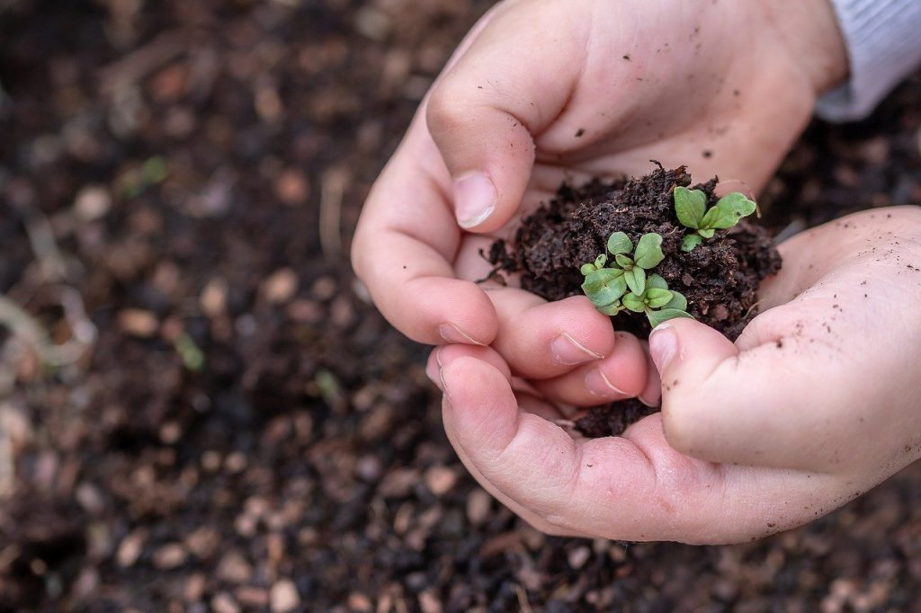 seedlings, seed, children's hands